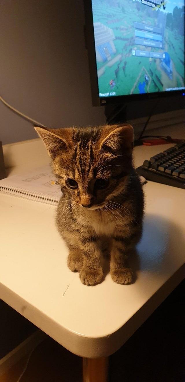 Cat - Trer 44
