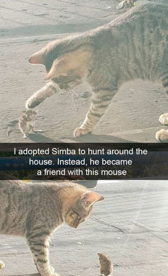 cat memes - 9400832256