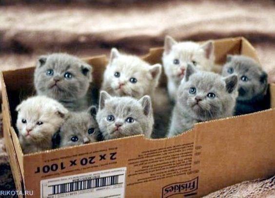 Cat - Friskies 2 x 20 x 100r RIKOTA RU