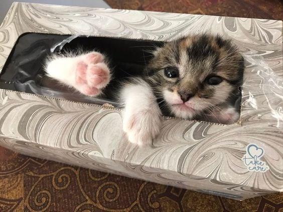 Cat - aker