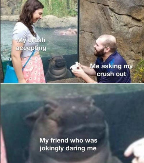 animal memes - 9400969728