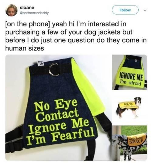 dog memes - 9400971776