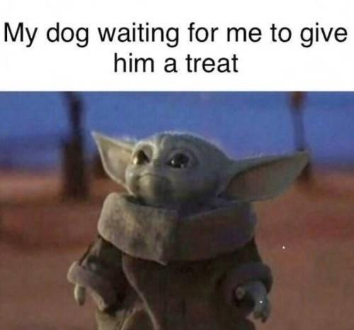 dog memes - 9400991232