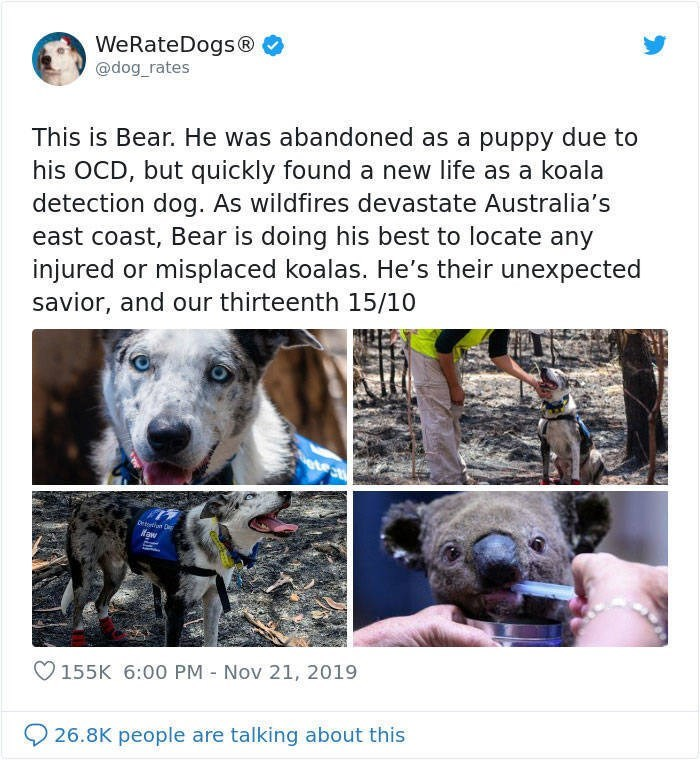 Dog breed - WeRateDogs® @dog_rates This is Bear. He was abandoned as a puppy due to his OCD, but quickly found a new life as a koala detection dog. As wildfires devastate Australia's east coast, Bear is doing his best to locate any injured or misplaced koalas. He's their unexpected savior, and our thirteenth 15/10 দে ifaw 155K 6:00 PM - Nov 21, 2019 26.8K people are talking about this