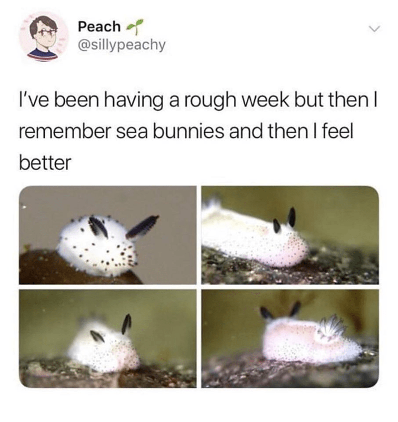 Organism - Peach @sillypeachy I've been having a rough week but then I remember sea bunnies and then I feel better