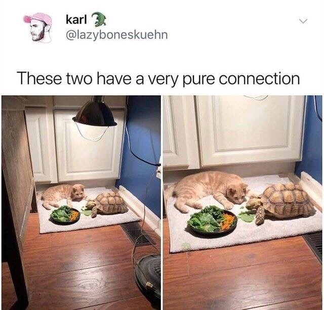 Product - karl 3 @lazyboneskuehn These two have a very pure connection