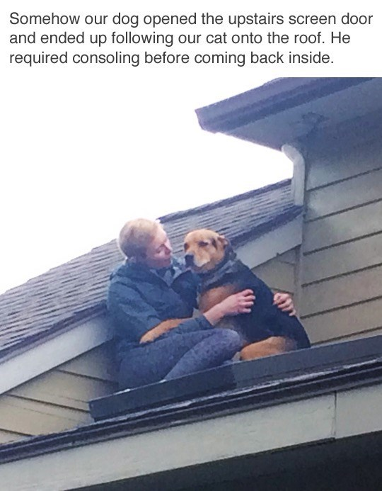 Sky - Somehow our dog opened the upstairs screen door and ended up following our cat onto the roof. He required consoling before coming back inside.