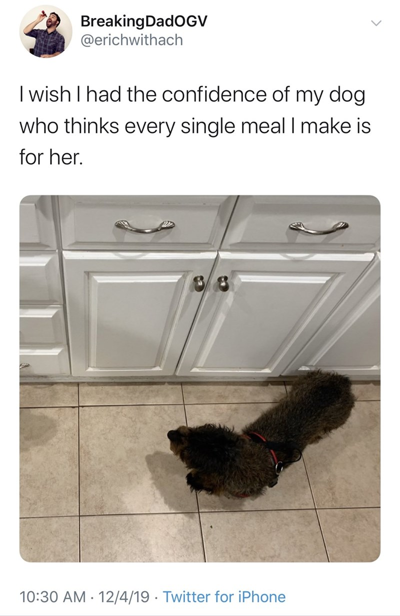 "Funny Twitter meme that reads, ""I wish I had the confidence of my dog who thinks every single meal I make is for her"" above a photo of a little dog in the kitchen"