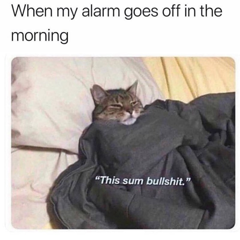 "Cat - When my alarm goes off in the morning ""This sum bullshit."""