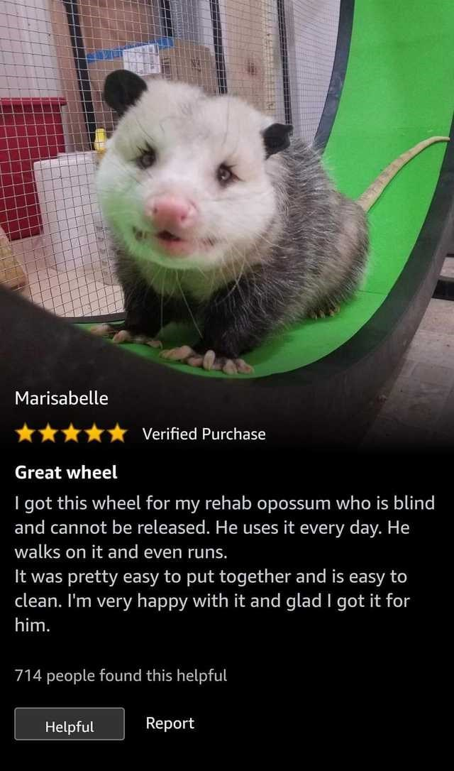Mammal - Marisabelle Verified Purchase Great wheel I got this wheel for my rehab opossum who is blind and cannot be released. He uses it every day. He walks on it and even runs. It was pretty easy to put together and is easy to clean. I'm very happy with it and glad I got it for him. 714 people found this helpful Report Helpful