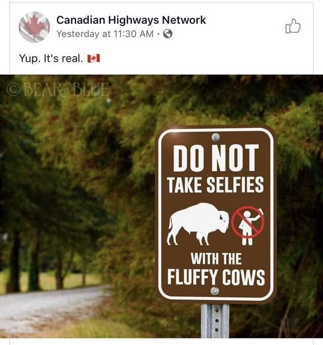 Nature reserve - Canadian Highways Network Yesterday at 11:30 AM · O Yup. It's real. El OBEAR BLUE DO NOT TAKE SELFIES WITH THE FLUFFY COWS