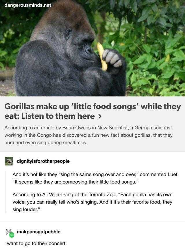 """Western lowland gorilla - dangerousminds.net Gorillas make up 'little food songs' while they eat: Listen to them here > According to an article by Brian Owens in New Scientist, a German scientist working in the Congo has discovered a fun new fact about gorillas, that they hum and even sing during mealtimes. A dignityisforotherpeople And it's not like they """"sing the same song over and over,"""" commented Luef. """"It seems like they are composing their little food songs."""" According to Ali Vella-Irving"""