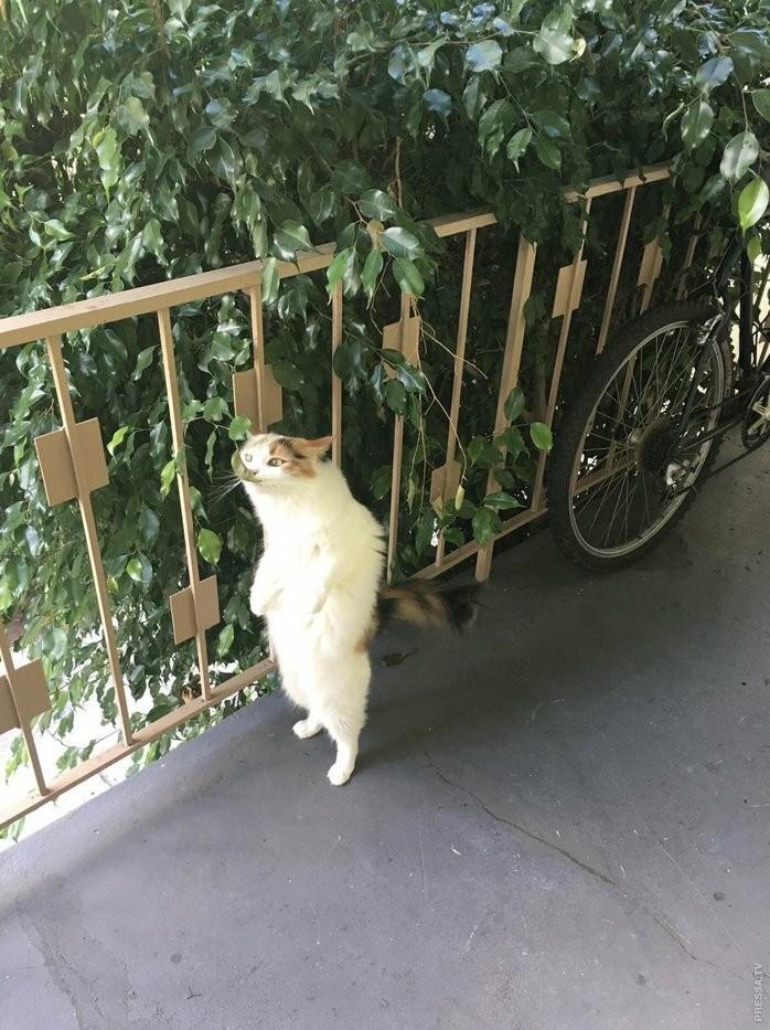 Cat - PRESSATV