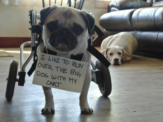 Dog - I LIKE TO RUN OVER THE BIG DOG WITH MY CART