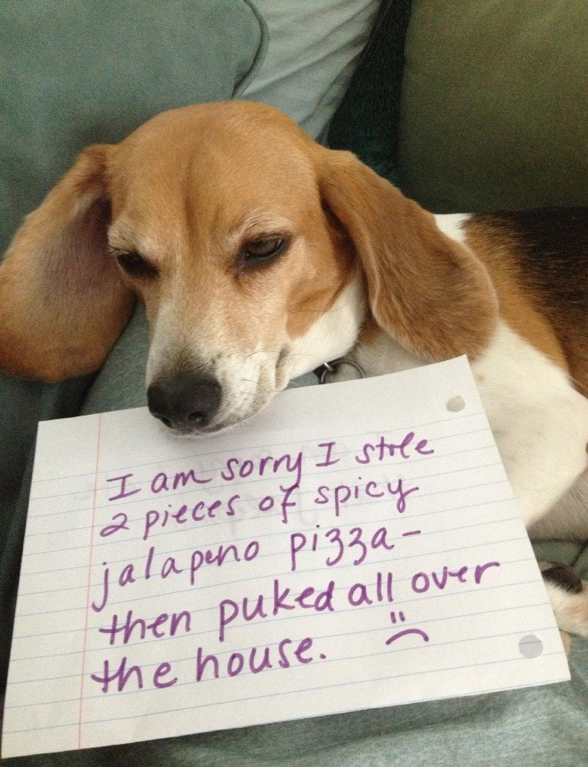 Dog - I am sorry I strle 2 pieces of spicy jala puno pizza- then puked all over the house.