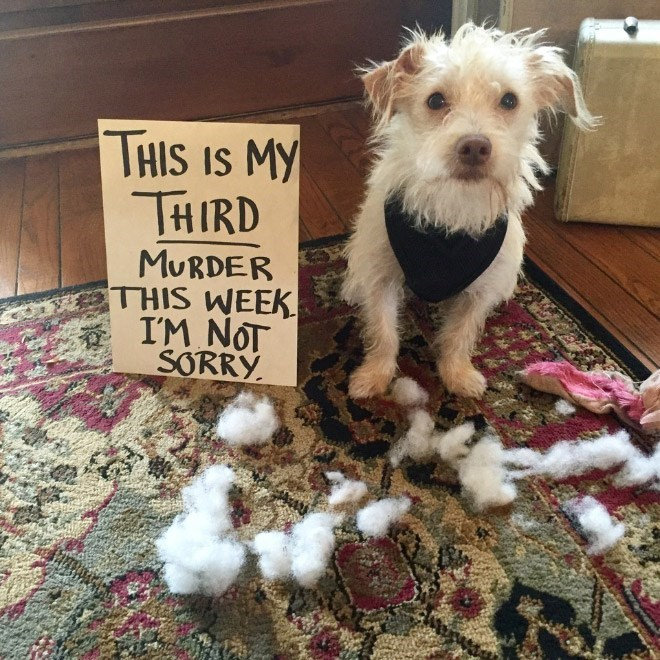 Dog - THIS IS MY THIRD MURDER THIS WEEK I'M NOT SORRY