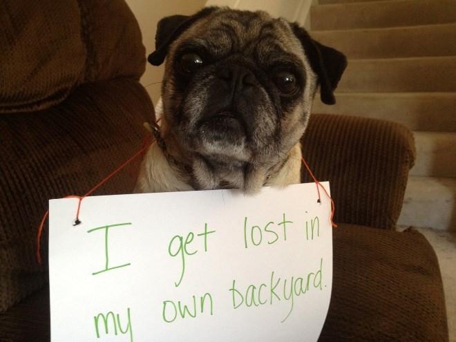 Dog - I. lost in backyard my Own