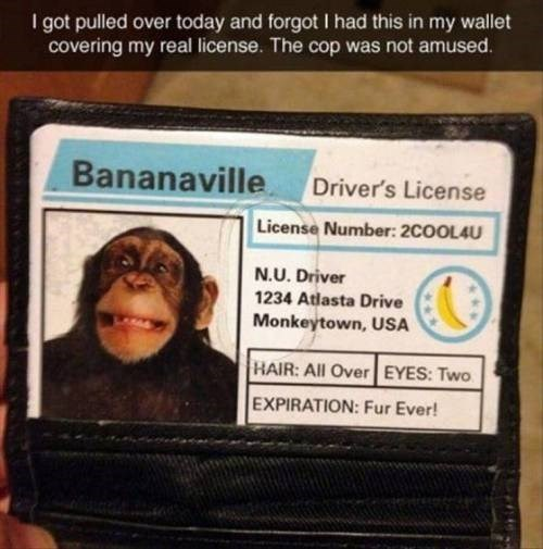 Text - I got pulled over today and forgot I had this in my wallet covering my real license. The cop was not amused. Bananaville Driver's License License Number: 2COOL4U N.U. Driver 1234 Atlasta Drive Monkeytown, USA HAIR: All Over EYES: Two EXPIRATION: Fur Ever!