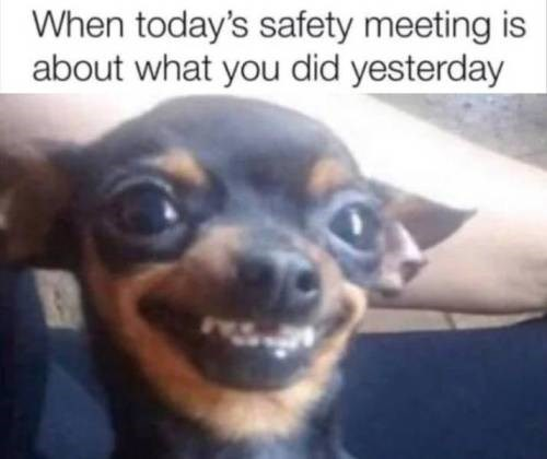 Dog breed - When today's safety meeting is about what you did yesterday