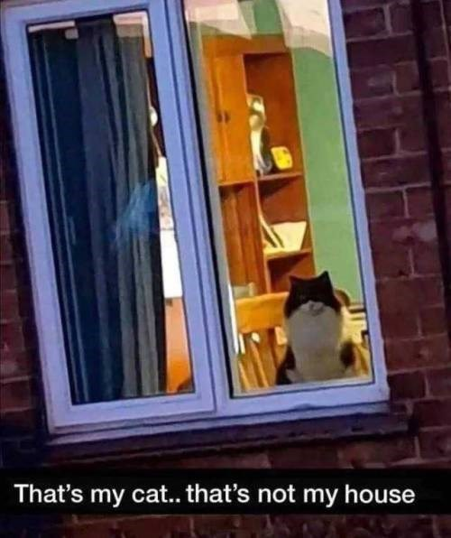 Window - That's my cat.. that's not my house