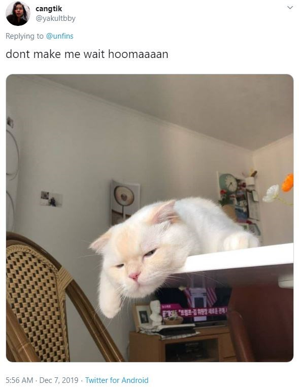 Cat - cangtik @yakultbby Replying to @unfins dont make me wait hoomaaaan BONE 5:56 AM - Dec 7, 2019 - Twitter for Android