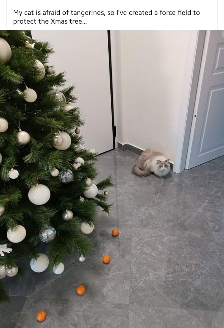 christmas tree tangerines lol Cats funny - 9402500864