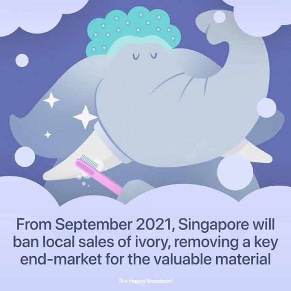 Cartoon - From September 2021, Singapore will ban local sales of ivory, removing a key end-market for the valuable material The Happy Broadcost