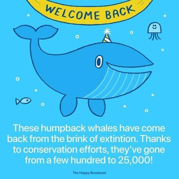 Fish - WELCOME BACK These humpback whales have come back from the brink of extintion. Thanks to conservation efforts, they've gone from a few hundred to 25,000! The Happy Broadcast :)