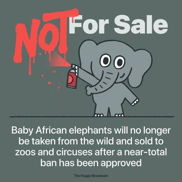 Text - For Sale No 00 Baby African elephants will no longer be taken from the wild and sold to zoos and circuses after a near-total ban has been approved The Happy Broodcast