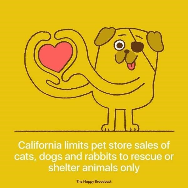 Text - California limits pet store sales of cats, dogs and rabbits to rescue or shelter animals only The Happy Broadcost