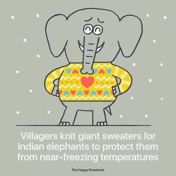 Cartoon - Villagers knit giant sweaters for Indian elephants to protect them from near-freezing temperatures The Happy Broadcast