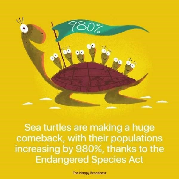 Poster - 980% Sea turtles are making a huge comeback, with their populations increasing by 980%, thanks to the Endangered Species Act The Happy Broadcast