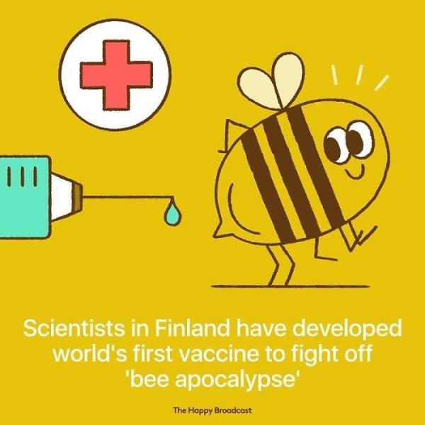Yellow - Scientists in Finland have developed world's first vaccine to fight off 'bee apocalypse' The Happy Broadcost