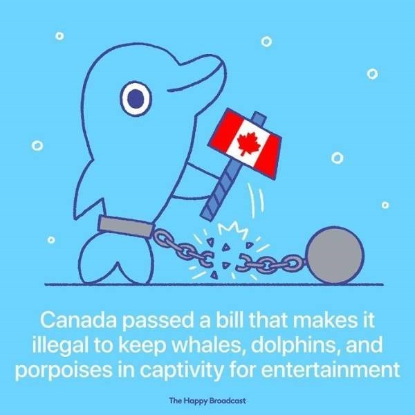Cartoon - Canada passed a bill that makes it illegal to keep whales, dolphins, and porpoises in captivity for entertainment The Happy Broadcast