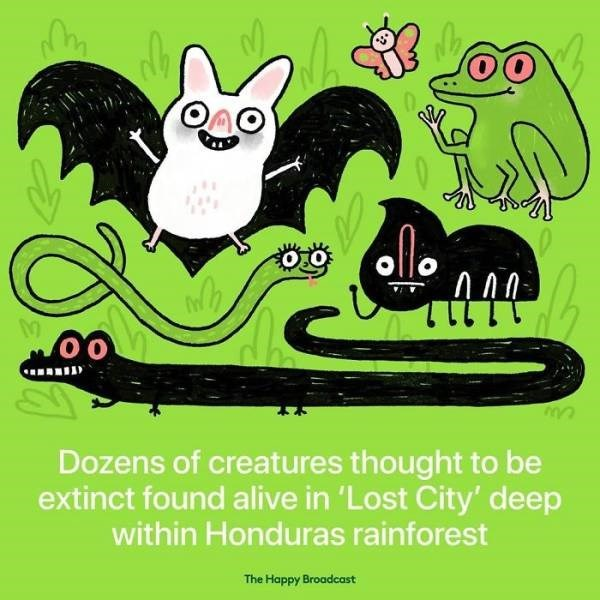 Cartoon - allo 00 Dozens of creatures thought to be extinct found alive in 'Lost City' deep within Honduras rainforest The Happy Broadcast