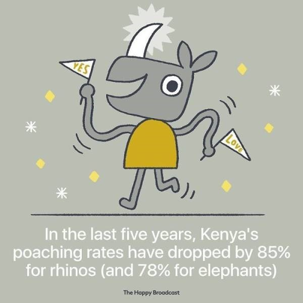 Cartoon - YES LOVE In the last five years, Kenya's poaching rates have dropped by 85% for rhinos (and 78% for elephants) The Happy Broadcast
