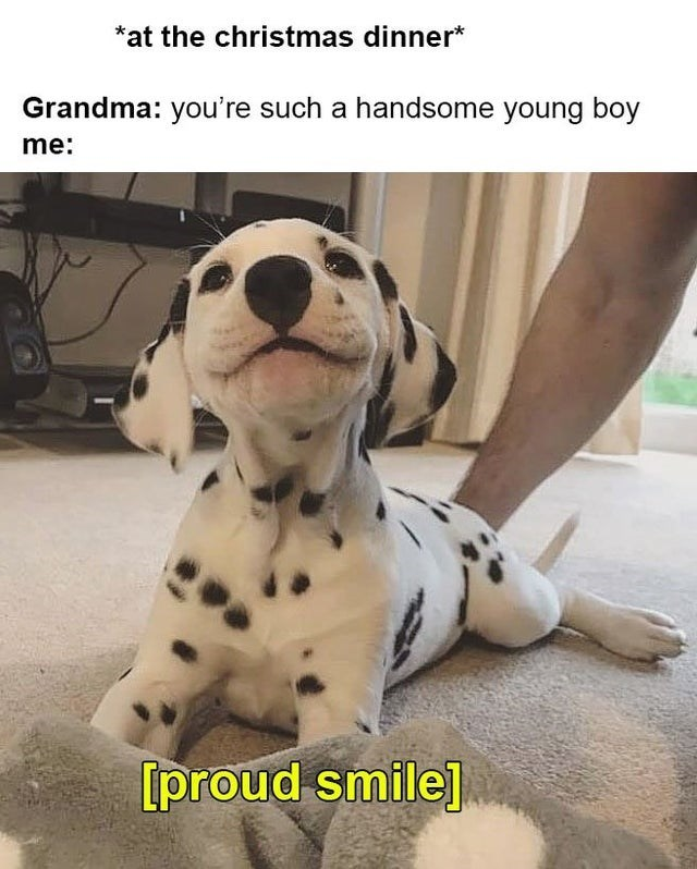 Dalmatian - *at the christmas dinner* Grandma: you're such a handsome young boy me: [proud smile]