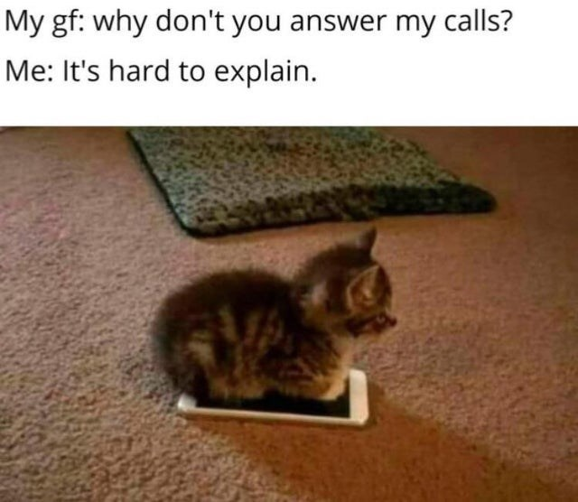 Cat - My gf: why don't you answer my calls? Me: It's hard to explain.