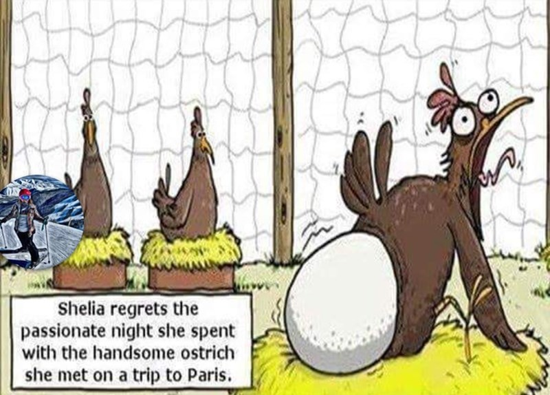 Cartoon - Shelia regrets the passionate night she spent with the handsome ostrich she met on a trip to Paris.