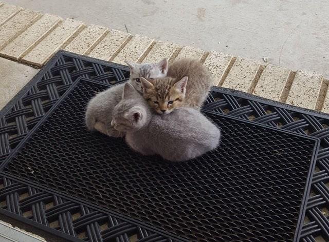 Cat - LETY