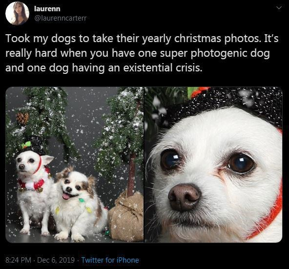 Canidae - laurenn @laurenncarterr Took my dogs to take their yearly christmas photos. It's really hard when you have one super photogenic dog and one dog having an existential crisis. 8:24 PM Dec 6, 2019 · Twitter for iPhone