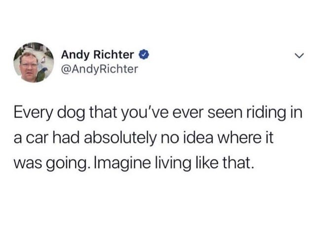 Text - Andy Richter O @AndyRichter Every dog that you've ever seen riding in a car had absolutely no idea where it was going. Imagine living like that.
