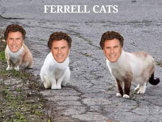 Friendship - FERRELL CATS