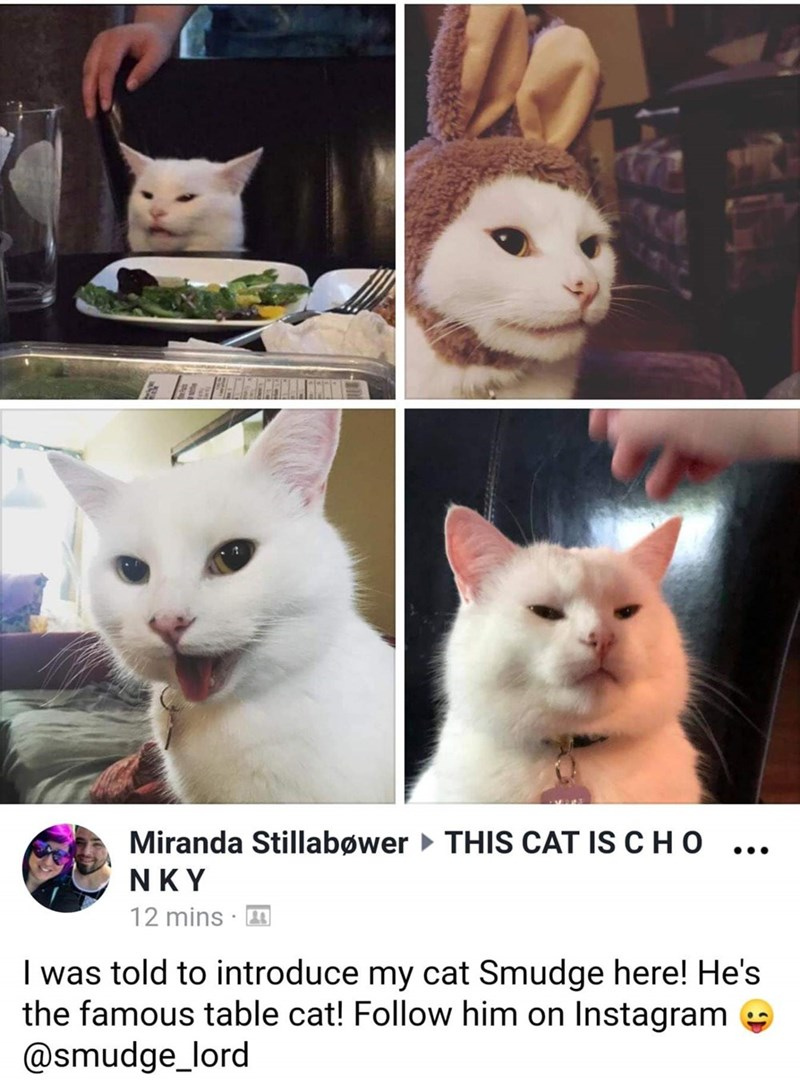Cat - Miranda Stillabøwer THIS CAT IS CHO .. NKY 12 mins · I was told to introduce my cat Smudge here! He's the famous table cat! Follow him on Instagram @smudge_lord