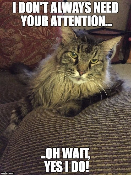 Cat - I DON'T ALWAYS NEED YOUR ATTENTION. OH WAIT, YES I DO! imgflip.com