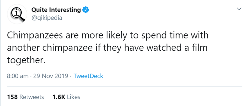 Text - Quite Interesting @qikipedia Chimpanzees are more likely to spend time with another chimpanzee if they have watched a film together. 8:00 am · 29 Nov 2019 · TweetDeck 1.6K Likes 158 Retweets