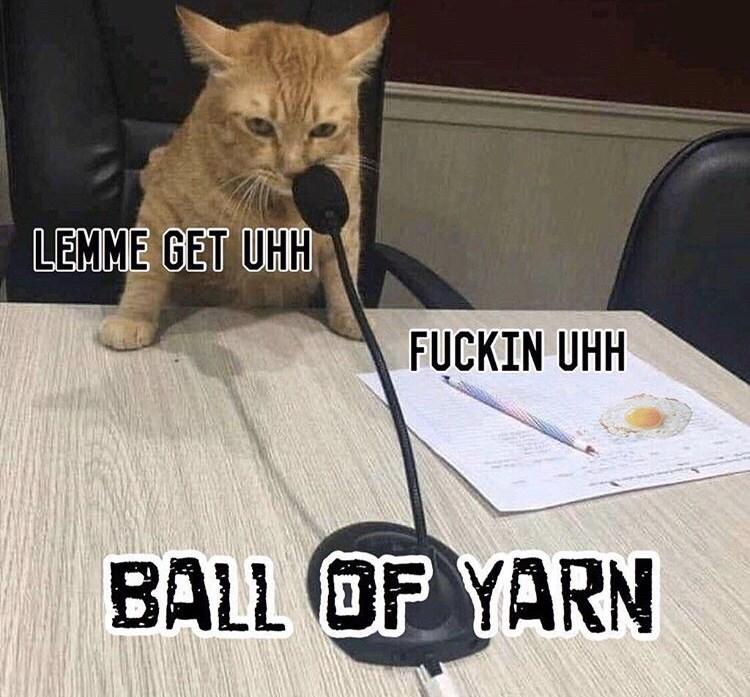 Cat - LEMME GET UHH FUCKIN UHH BALL OF YARN