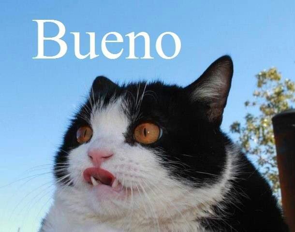 Cat - Bueno