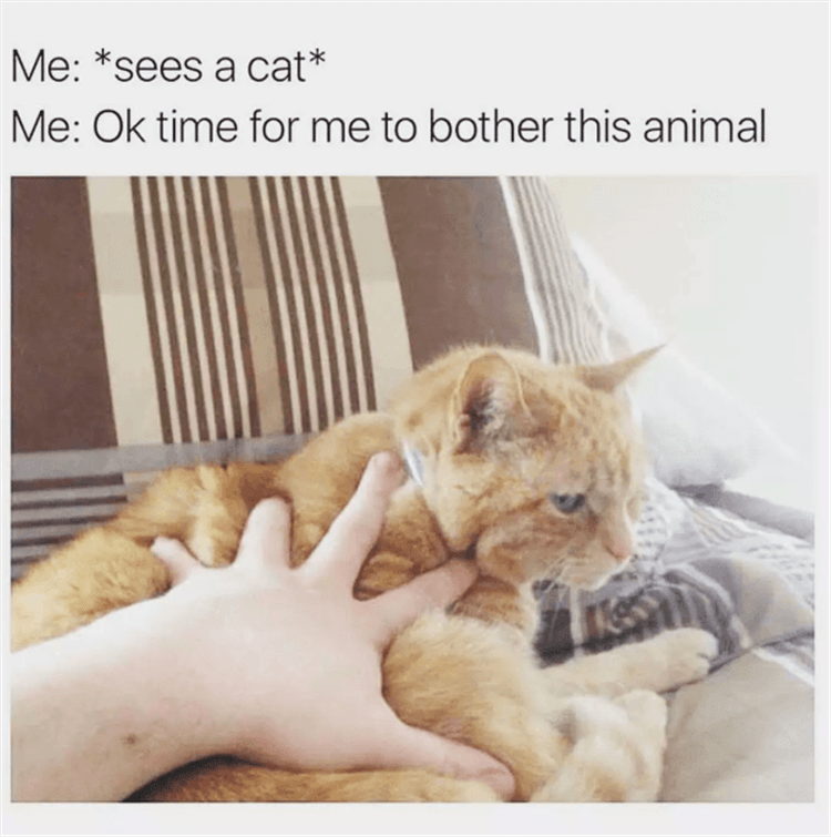 Cat - Me: *sees a cat* Me: Ok time for me to bother this animal