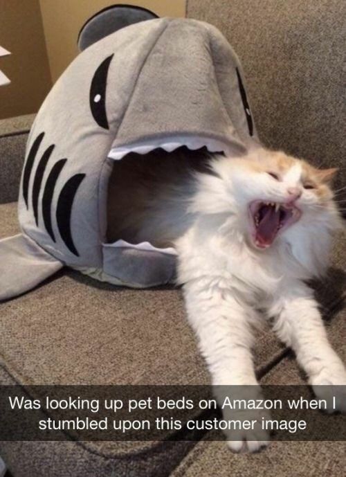 Cat - Was looking up pet beds on Amazon when I stumbled upon this customer image